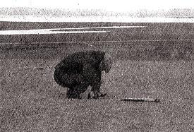 Место приземления космического корабля «Восток» отмечают ломом. 12 апреля 1961 года. Саратовская область. Колхозное поле